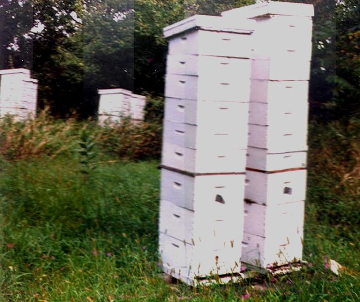 Hives loaded with honey